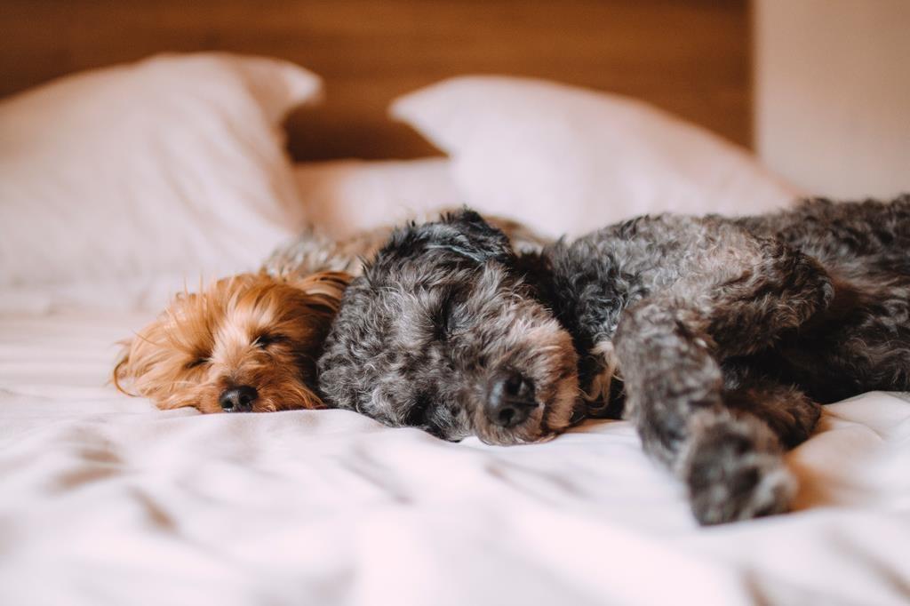 Senhorios podem (ou não) rejeitar inquilinos com animais de estimação?